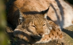 Pozityvas: gražūs gyvūnai (I)