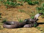 Pozityvas: gyvatės (snakes) I